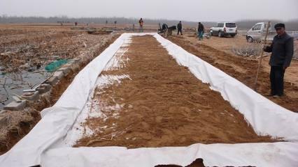 防渗膜在藕池养殖施工